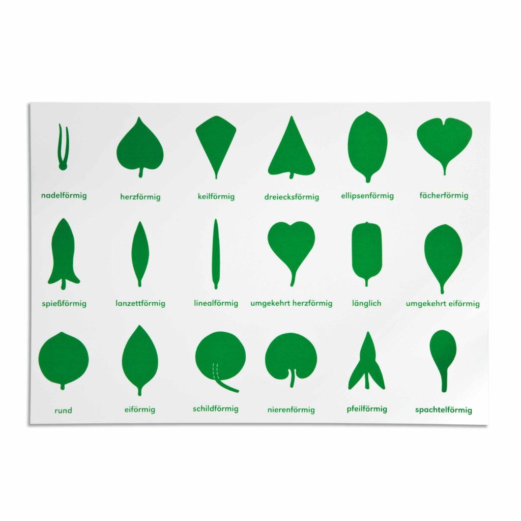 Lernplakat Botanische Kommode (German version)-produs original Nienhuis Montessori-prin Didactopia by Evertoys