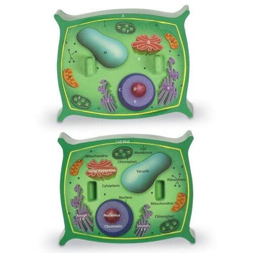 Secțiunea celulei vegetale - Learning Resources 1