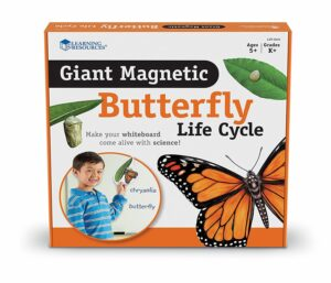 Set magnetic - Ciclul de viață al fluturelui - Learning Resources prin Didactopia 1