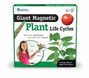 Set magnetic - Ciclul de viață la plante - Learning Resources prin Didactopia 5